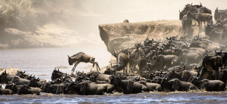 great wildebeest migration tanzania
