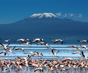 kilimanjaro-flamingoes