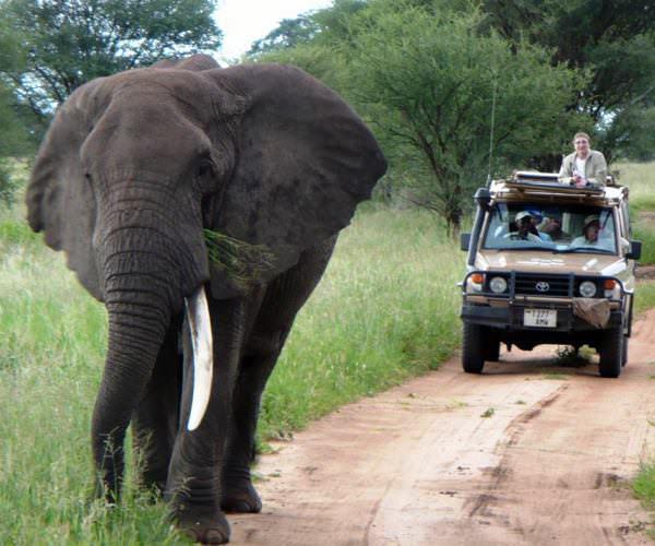 Elephant enjoying an afternoon walk