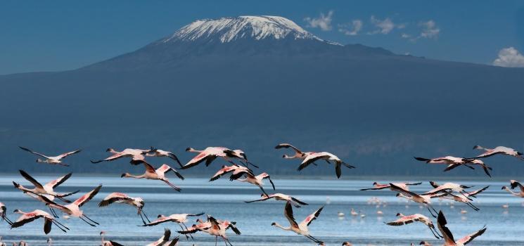 kilimanjaro and manyara lake tanzania