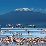 kilimanjaro-flamingoes