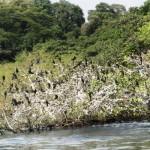 lake victora birds rubondo island